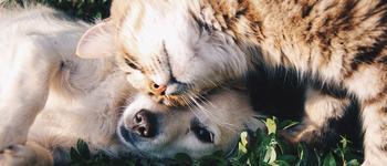 Image - Dog as My Doctor, Cat as My Nurse