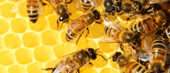 Image - Bees, Butterflies and Your Well-Being