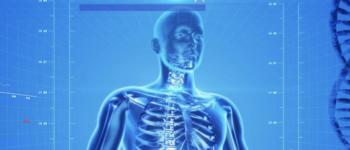 Image - digital illustration of human body
