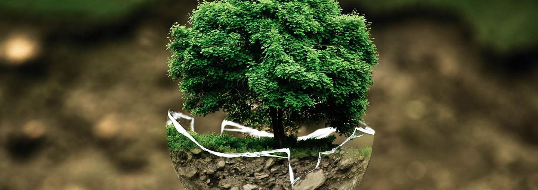 Image - Environmental Movement