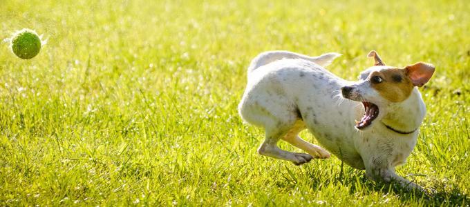 Image - Solving Your Doggy Dilemmas