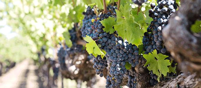 Image - Celebrating Sustainable Food and Wine