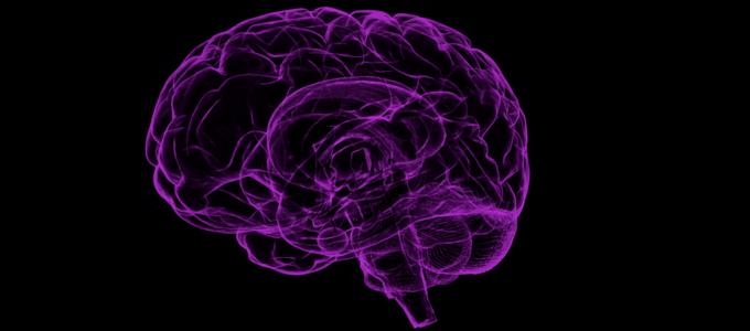 Image - human brain outline