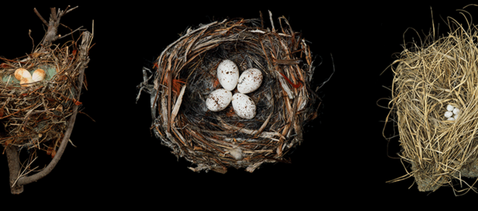 Image - Beyond the Marvel of a Nest