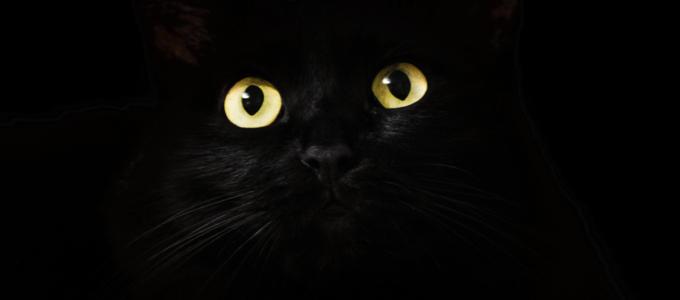 Image - black cat