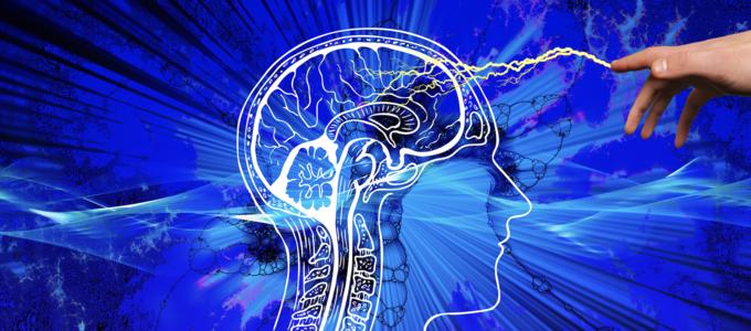 Image - human brain
