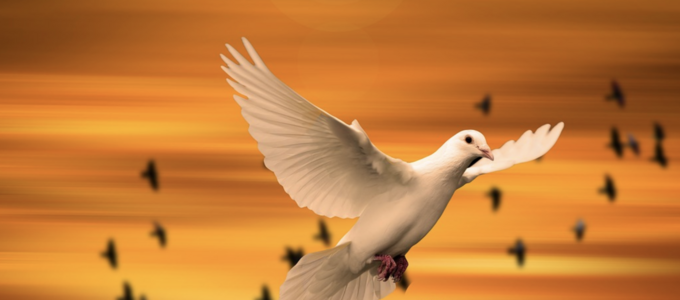 Image - dove
