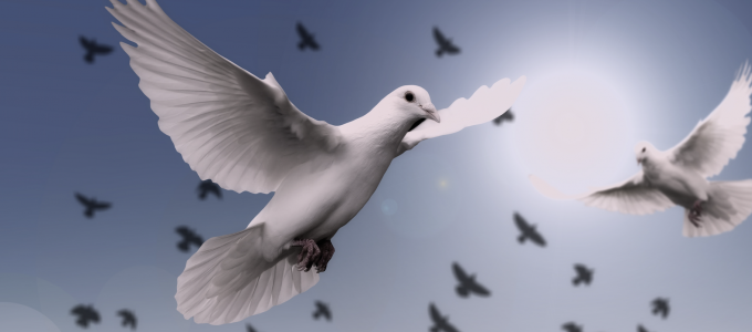 Image - doves in flight