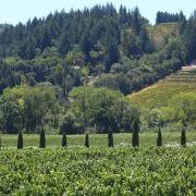 Image - A Holiday Toast to the 2016 Wine Harvest