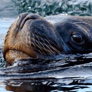 Image - Safe Marine Environments