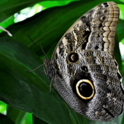 Image - Our Inner Ecology