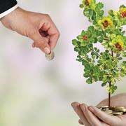 Image - money and a plant
