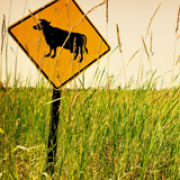 Image - Grazing, Gas and Grass
